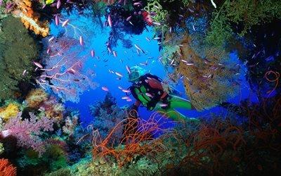 Лучшее место для дайвинга - Мальдивы
